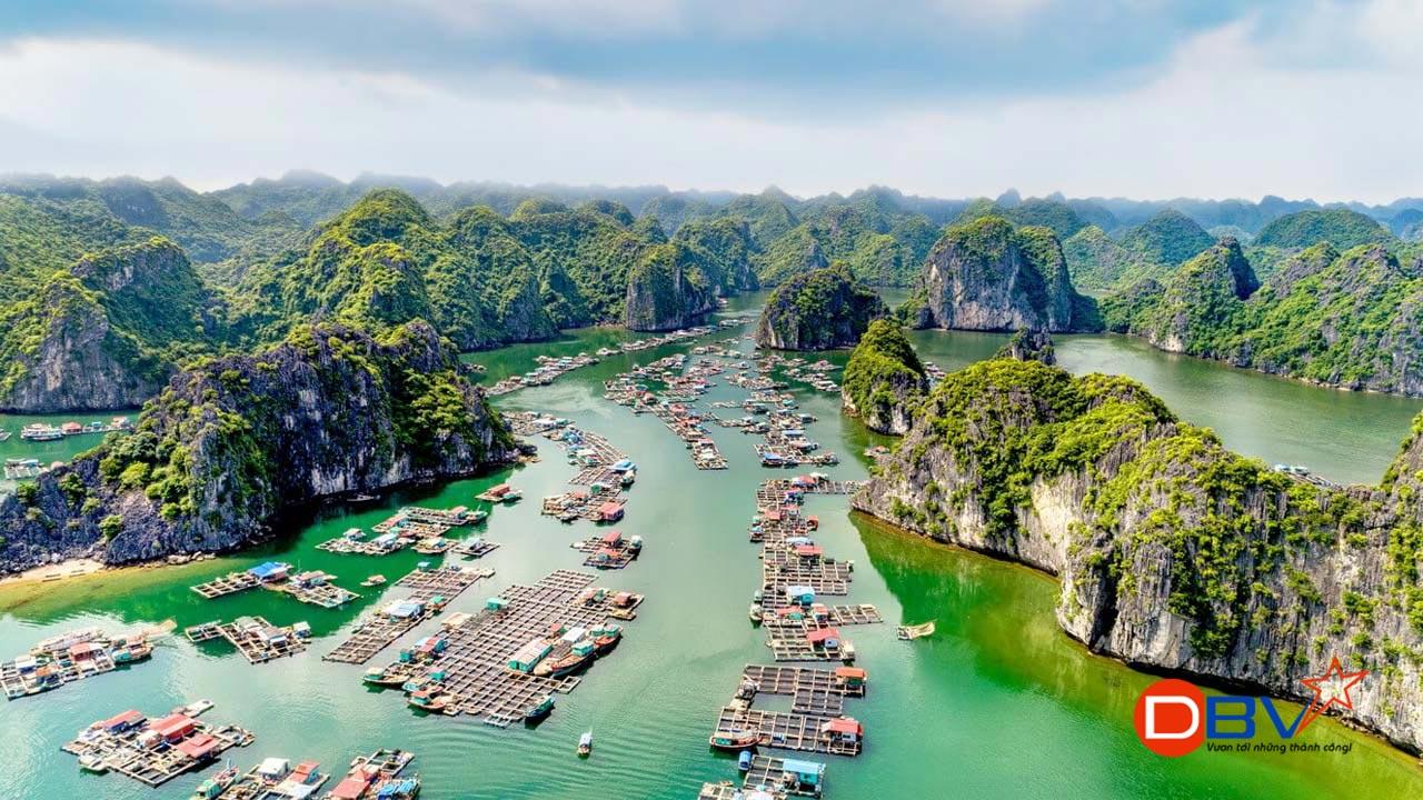 Thuê xe 7 chỗ đi vịnh Hạ Long tại Hà Nội